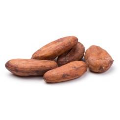 Semi di Cacao BIO
